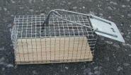 Lebendfalle Maus, einseitig 5 x 5 x 12 cm