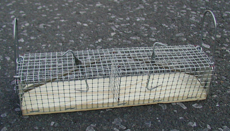 Lebend-Mausefalle, zweiseitig 6 x 6 x 24 cm
